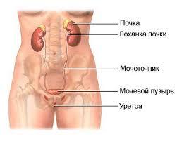 Заболевания мочевыделительной системы Цистит