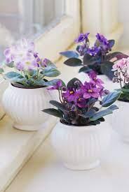 Някои обикновени стайни растения могат да помогнат в това: Naj Izdrzhlivite Stajni Rasteniya Krasota Bez Usilie