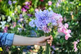planning your annual cut flower garden