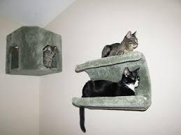 Corner Cat Shelves Wall Shelves Design Gorgeous Wall Mounted Shelves For Cats 63