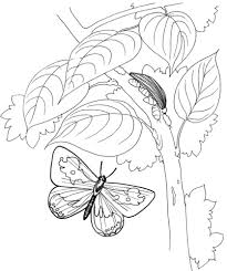 Small Picture Caterpillar and Butterfly 2 coloring page Free Printable