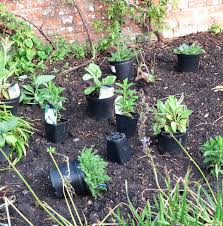 how to plant a border set the plants out in their pots first