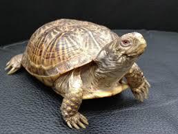 basic care box turtles
