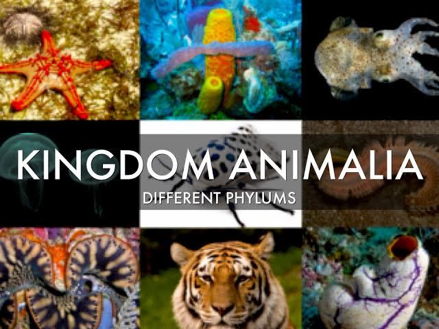 Kingdom Animelia