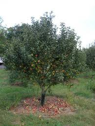 E Coli Outbreak Associated With Louisburg Cider Mill Ciderfest In Fruit Trees In Kansas