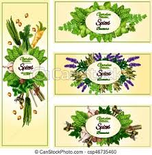 garden banners. Vecor Banners Of Garden Spices And Herbs - Csp46735460