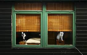 window from outside looking in. Brilliant Outside Animalslookingthroughthewindow13 Inside Window From Outside Looking In 2