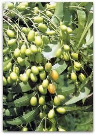 Popular Jamaican FoodsJamaican Fruit Trees