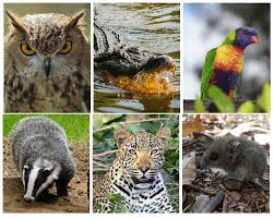 diurnal animals list for kids. Delighful List Difference Between Nocturnal And Diurnal Animals To List For Kids R