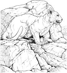 cougar pages mountain lion coloring page