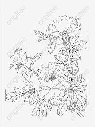 無料ダウンロードのための牡丹の花線描 牡丹の花 線画 線稿png画像素材
