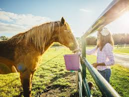 how to feed your horse for weight gain