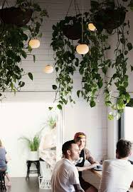 Hanging Plants hanging plants 25 Indoor Garden Ideas