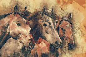 Pferdesprüche Eine Sammlung Der Schönsten Sprüche Equinode