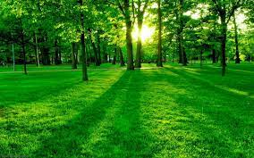 Green Forest Background Wallpaper For ...