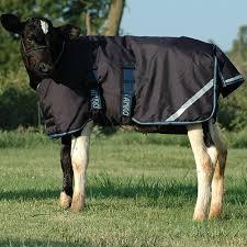Amigo Foal Blanket