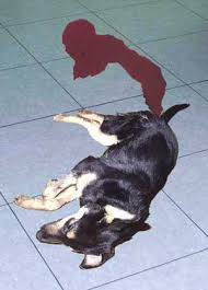 Magen-Darm-Trakt - naturheilpraxis für hunde