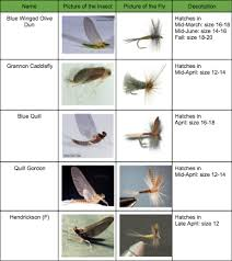 Fly Fishing Fly Identification Chart Fly Identification Penn State Fly Fishing Club