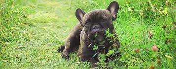 dog eating grass and other plants know