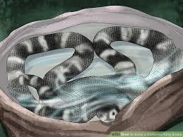 image titled keep a california king snake step 13