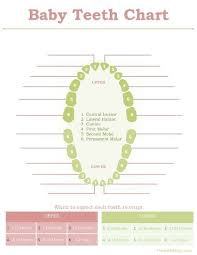 Teeth Growth Chart Baby Book Print Outs Growth Chart Baby Books Tooth Chart