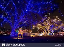 Austin Christmas Light Festival Austin Trail Of Lights Stock Photos Austin Trail Of Lights