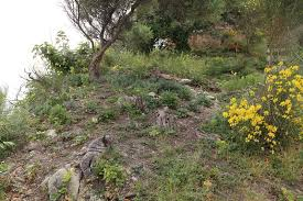 Translocation of Dianthus rupicola subsp. rupicola to the Lachea ...