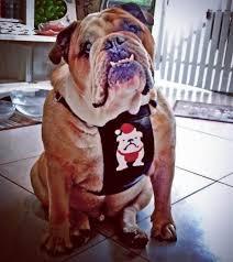 santa paws leather dog harness