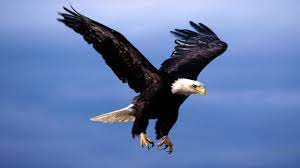 Flying Eagle Wallpapers - Top Free ...