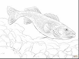 Small Picture awesome bass fish coloring pages realistic with fishing coloring