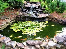 goldfish koi pond i loved the idea of a pond on an incline with