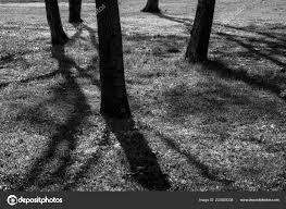 Tree Shadow Light Shade Shade Big Trees Park Sunrise Black White Process Sunshine