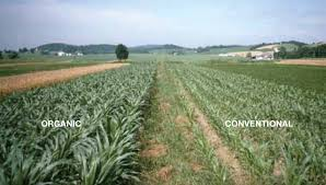 does organic farming outperform conventional farming off grid world the