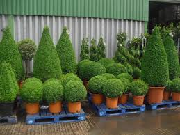 topiary by design darlington uk