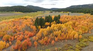 outdoor nature photography. KateAnderson-outdoor-nature-fall-leaves-idaho Outdoor Nature Photography S