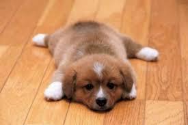 Best hardwood floors for dogs Urine Best Hardwood Floors For Dogs Bayscanorg Choosing The Best Hardwood Floors For Dogs The Basic Woodworking