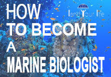 career guide marine biologist job description and salary