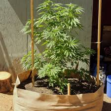 smart pot cans air pruning root