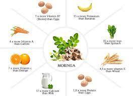 why moringa evos naturals