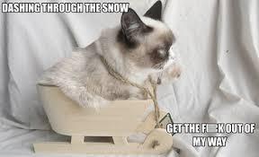 The Best of Grumpy Cat's Christmas! | SMOSH via Relatably.com