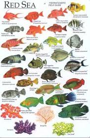 Red Sea Fish Identification Chart Fish Chart Sea