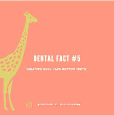 Dentist Quotes Beauteous Dental Fun Fact Quotes