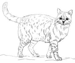 Cat Coloring Pages Realistic Page Free Printable