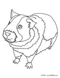 Small Picture Top 25 Free Printable Guinea Pig Coloring Pages Online Animal