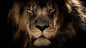 4K Lion Desktop Wallpapers - Top Free ...