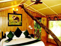 tree house resort. Room Tree House Resort E