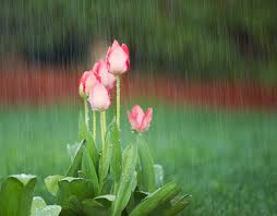 april showers bring may flowers how to