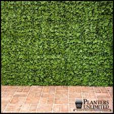 faux ivy green wall on green garden wall artificial with 38 best artificial green walls images on pinterest green walls