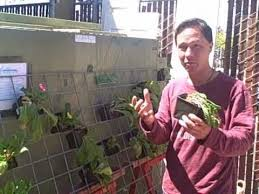 Small Picture Grow a Vertical Vegetable Garden in a Small Space with Hog Wire