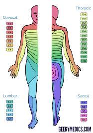 Dermatomes And Myotomes Anatomy Geeky Medics
